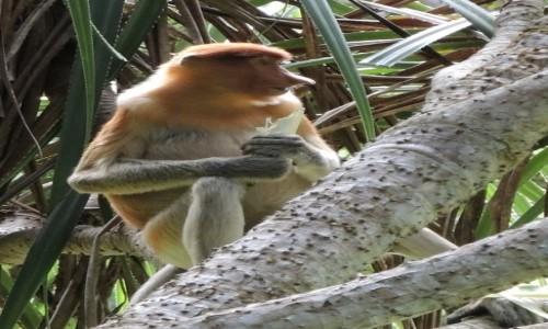 Zdjęcie MALEZJA / Bako / Borneo / śniadane