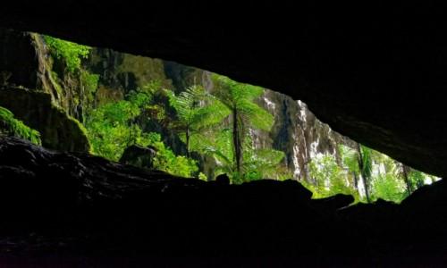 Zdjecie MALEZJA / Borneo / Mulu National Park /