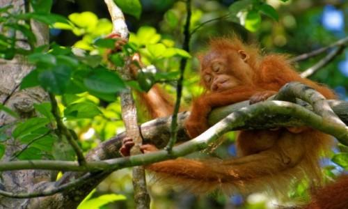 Zdjecie MALEZJA / Borneo / Semenggoh / Relax