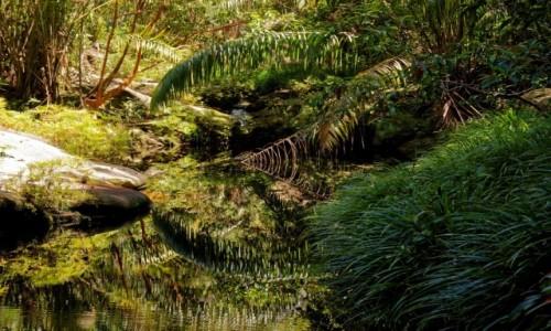 Zdjecie MALEZJA / Borneo / Bako National Park /