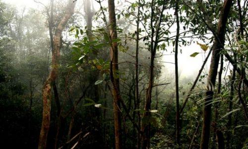 Zdjecie MALEZJA / brak / Borneo / Park Kinabalu_