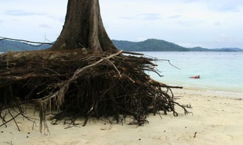Zdjęcie MALEZJA / brak / Kota Kinabalu/Borneo / Mamutik