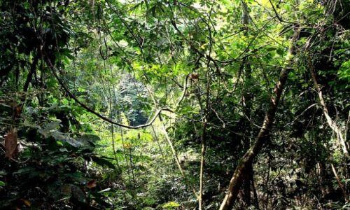 Zdjecie MALEZJA / brak / płw.malezyjski / Taman Negara 9