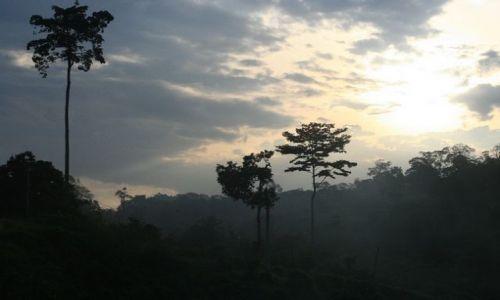 Zdjecie MALEZJA / brak / płw.malezyjski / Taman Negara