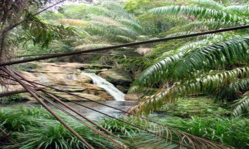 Zdjęcie MALEZJA / Sarawak / Bako National Park / Tajor Waterfall