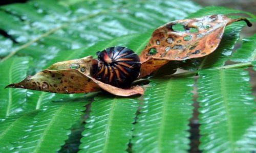 Zdjecie MALEZJA / Sarawak / Bako National Park / ...