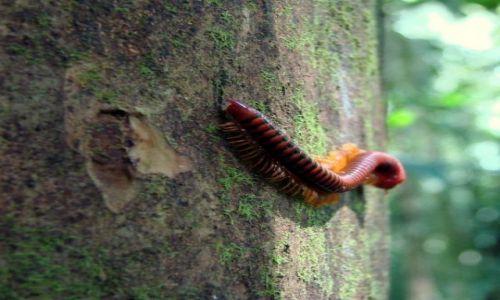 Zdjecie MALEZJA / Sarawak / Gunung Mulu National Park / mikropotworek:)