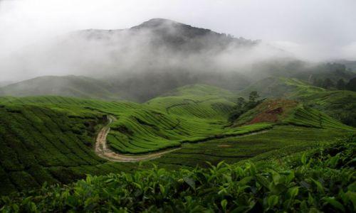 MALEZJA / Cameron Highlands / Pola herbaciane BOH / Wspomnienia przy herbatce ;-)