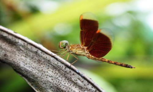 MALEZJA / Kuala Lumpur / butterfly garden / Butterfly garden KL