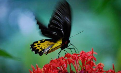 Zdjecie MALEZJA / brak / Kuala Lumpur / at Kuala Lumpur Butterfly Park