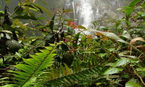 Zdjęcie MALEZJA / Pahang / Cameron Highlands / ... pierwszy kontakt z dżunglą...  i tropikalnym deszczem...
