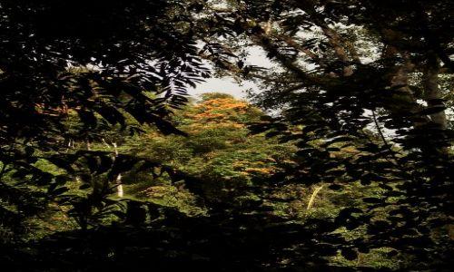 Zdjecie MALEZJA / Pahang / Cameron Highlands / ... kolorowe ogrody na koronach drzew...