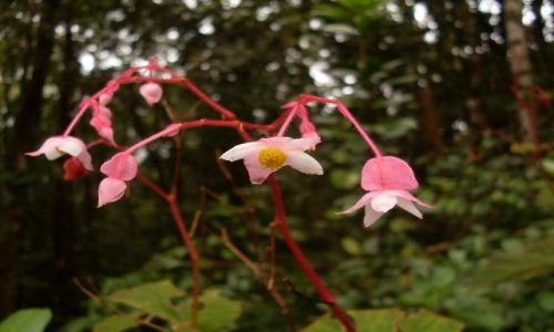 MALEZJA / Pahang / Cameron Highlands / ... kwiaty górą...