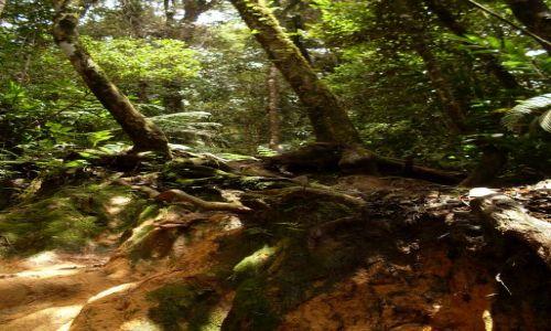 MALEZJA / Pahang / Cameron Highlands / ... mały uskok...