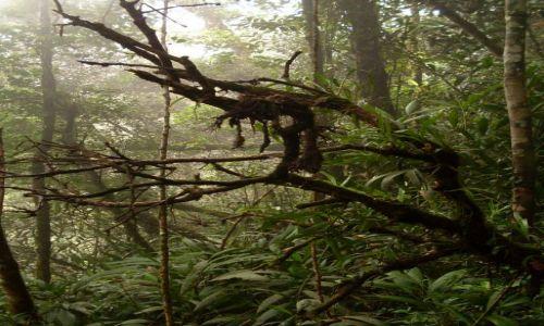 Zdjęcie MALEZJA / Pahang / Cameron Highlands / ... trochę mgły...