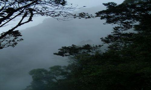 Zdjęcie MALEZJA / Pahang / Cameron Highlands / ... w oparach mgły...