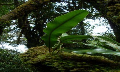 Zdjecie MALEZJA / Pahang / Cameron Highlands / ... zwykłe liście...