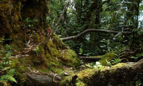 Zdjęcie MALEZJA / Pahang / Cameron Highlands / ... dżungla zawieszona na wys 2km....