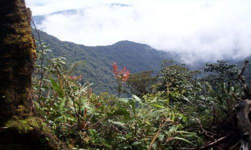 Zdjecie MALEZJA / Pahang / Cameron Highlands / ... ostatni rzut oka przed zejściem....