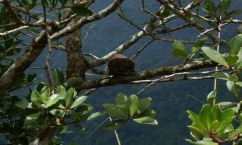 Zdjęcie MALEZJA / Sabah / Borneo-Mt. Kinabalu i okolice / ... Kinabalu free climber...