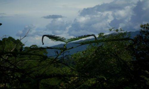 Zdjęcie MALEZJA / Sabah / Borneo- droga KK-Sandakan / ... zielone fraktale...