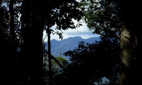 Zdjęcie MALEZJA / Sabah / Borneo- droga KK-Sandakan / ... są wysokie... drzewa...