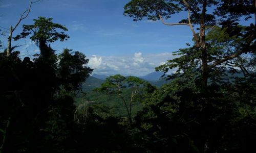 Zdjęcie MALEZJA / Sabah / Borneo- droga KK-Sandakan / ... są też piękne...