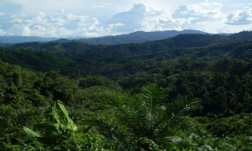 Zdjęcie MALEZJA / Sabah / Borneo- droga KK-Sandakan / ... po horyzont ...