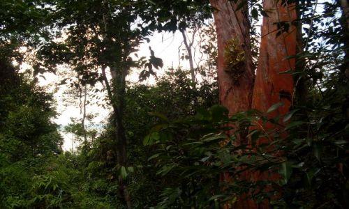 Zdjęcie MALEZJA / Sabah / Borneo-w drodze na Berhalę / ... Berhala od środka...