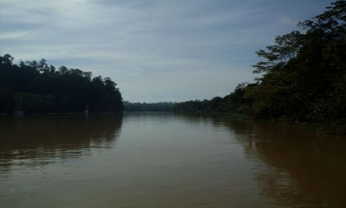 Zdjęcie MALEZJA / Sabah / Borneo-Sukau-okilice / ... duża woda ...