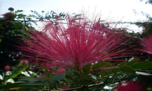 Zdjęcie MALEZJA / Sabah / Borneo-Sukau-okilice / ... promieniście....