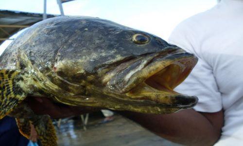 Zdjęcie MALEZJA / Sabah / Borneo-Semporna / ... gruba ryba ...