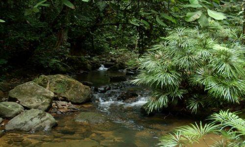 Zdjęcie MALEZJA / Sabah / Borneo-Tawau Hils / ... na drugą stronę ...