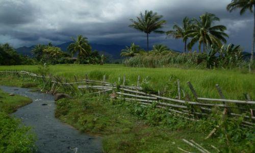 Zdjęcie MALEZJA / Sabah / Borneo-Croker Range / ... coś do jedzenia...