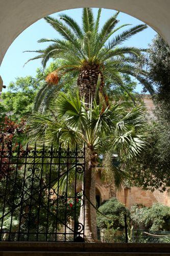 Zdjęcia: Valetta, Malta, Ogród, MALTA