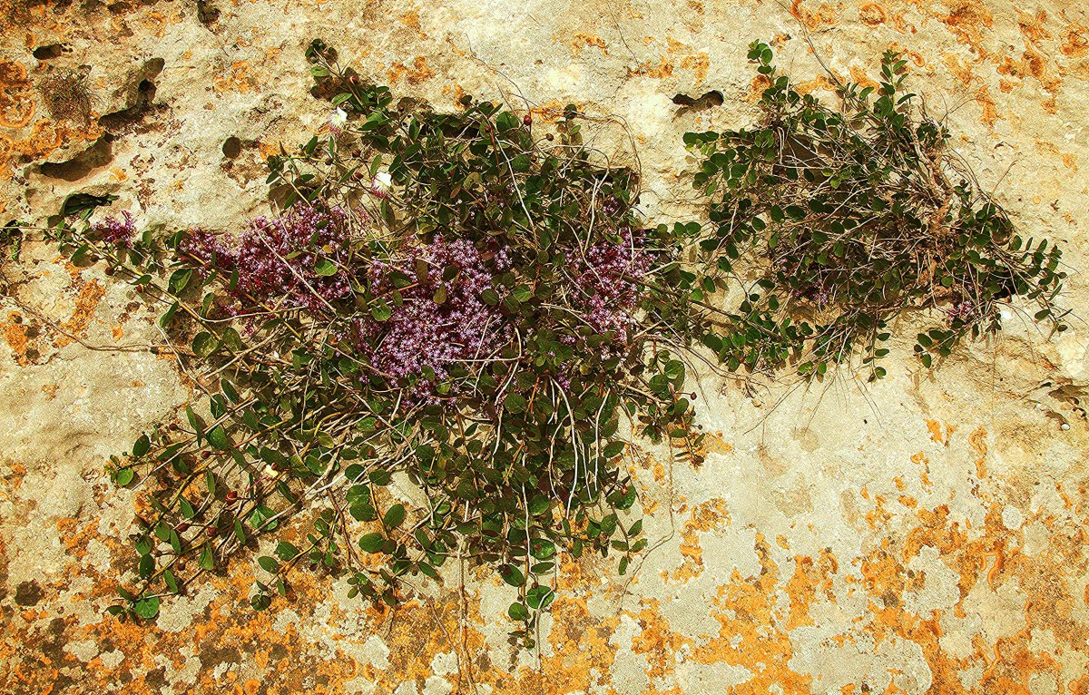 Zdjęcia: Wied il-Ghasri, Gozo, Ogrody Matki Natury, MALTA