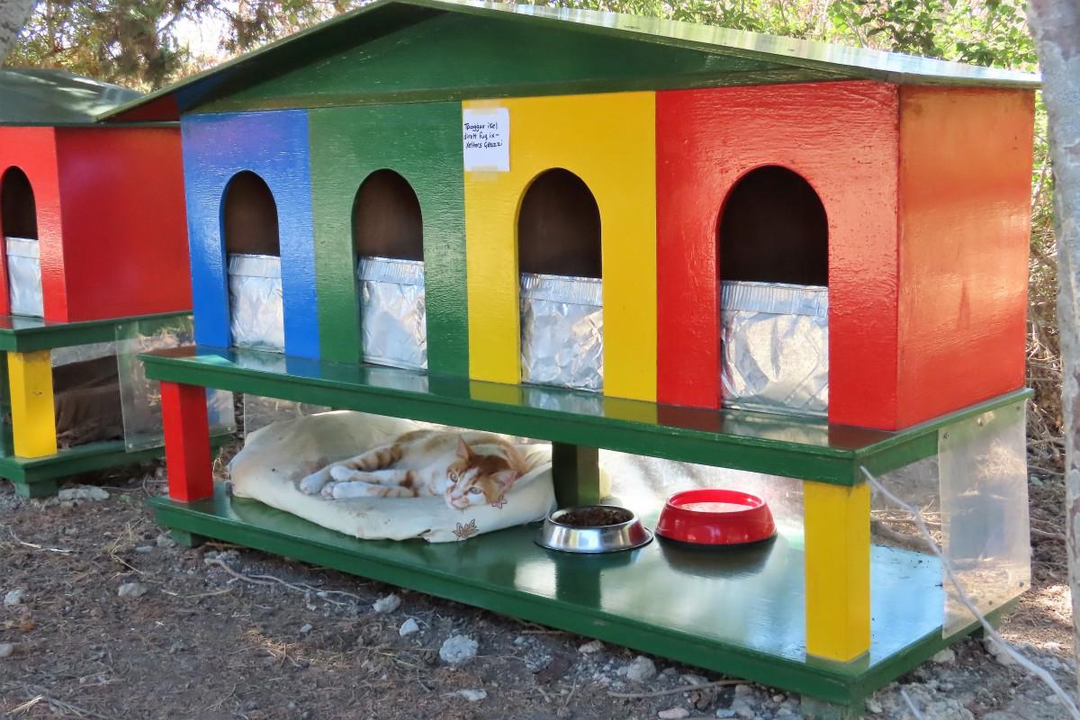Zdjęcia: Ta Qali, Wioska dla kotów, MALTA