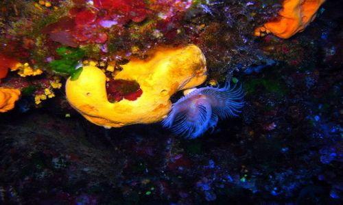 MALTA / Gozo / Marsalforn / Podwodny świat Gozo