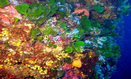 MALTA / - / Gozo / Kolorowy, podwodny świat
