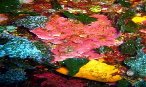 MALTA / - / Gozo / Podwodna flora