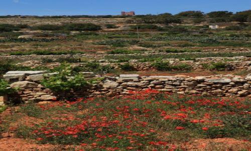 Zdjęcie MALTA / Gozo / Mellieha / Barwy Gozo