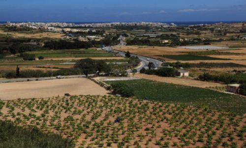 Zdjęcie MALTA / Malta  srodkowa / Mosta / Uprawy