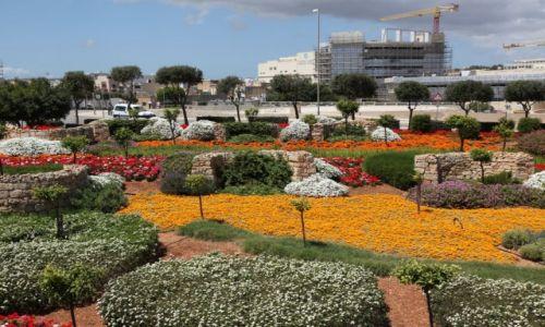 Zdjęcie MALTA / Msida / Szpital Mater Dei / Pachnący ogród