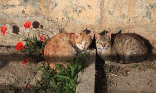 MALTA / Malta  srodkowa / �urrieq / Ka�dy na swoim