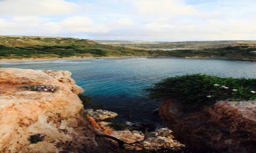 Zdjęcie MALTA / Melieha / Golden Bay / Zatoczka