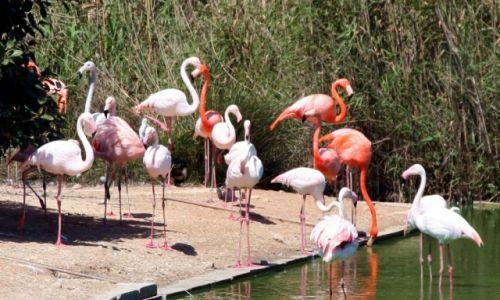Zdjęcie MALTA / Bugibba / Ptasi park / Wyspa flemingów