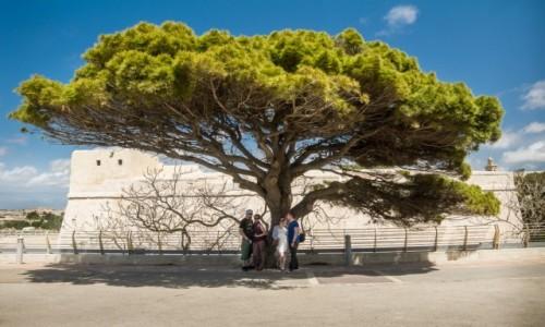 MALTA / Valletta / Valletta / W cieniu wielkiego drzewa