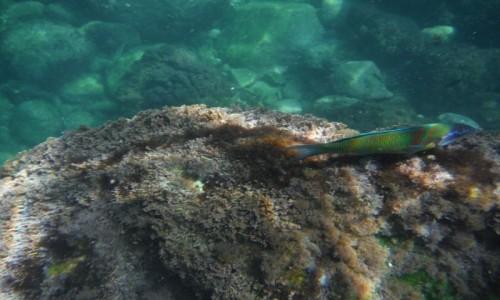 Zdjecie MALTA / Gozo / Wied Il-Ghasri / Podwodny świat na Gozo