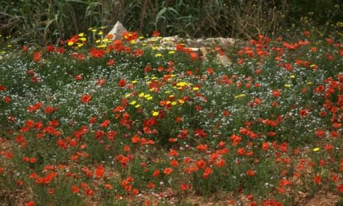 Zdjęcie MALTA / Siġġiewi / Għar Lapsi  / Naturalne piękno