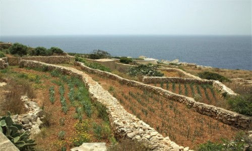 Zdjęcie MALTA / Malta południowa / Wied iż-Żurrieq / Poletka uprawne